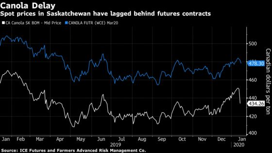 Canada's Canola Planting Prospects Dim After China Trade Tussle