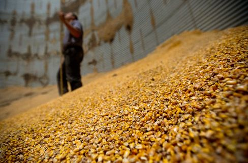 Corn Gains Most in 6 Months on Slow U.S. Sowing; Wheat, Soy Rise
