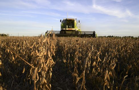 Soybean Harvest on a Farm near Salto, Argentina