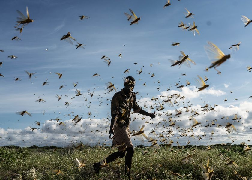 East Africa Experiences Worst Locust Swarms In Decades