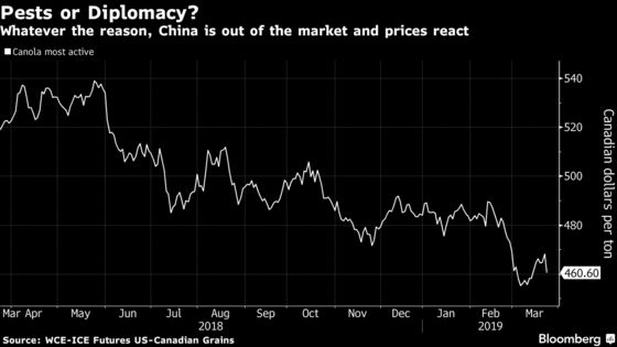 Canola Slumps as Canadian Growers Confirm China Stopped Buying