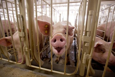 The Humane Society's New Pitch: This Pork Producer Is a Bad Investment