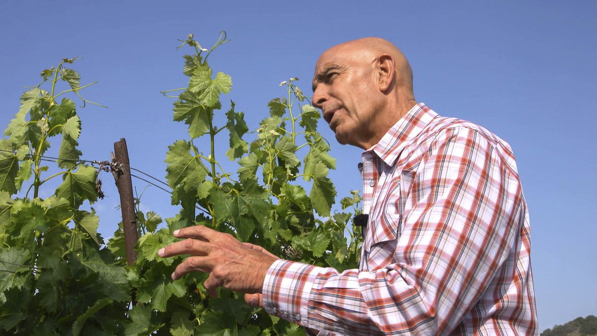 How Colony Capital Ceo Tom Barrack Became A Bordeaux Style Winemaker