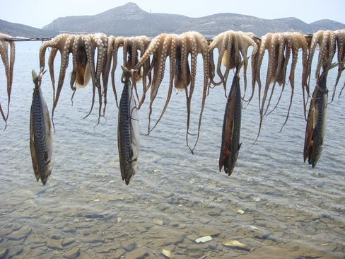 Octopus and fish await cooking in Antiparos.