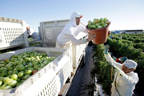 Why Wal-Mart Just Gave a Raise to Tomato Pickers