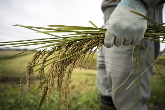 Your Bowl of Rice Is Hurting the Climate Too