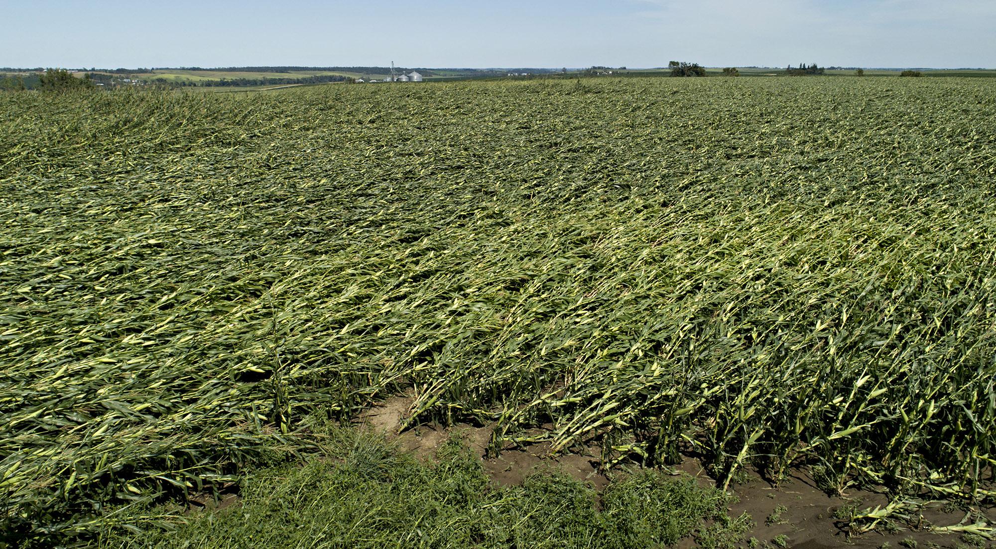 iowa storm corn GETTY sub
