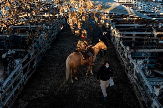 Argentina's 120-Year-Old Cattle Auction Is Leaving Buenos Aires