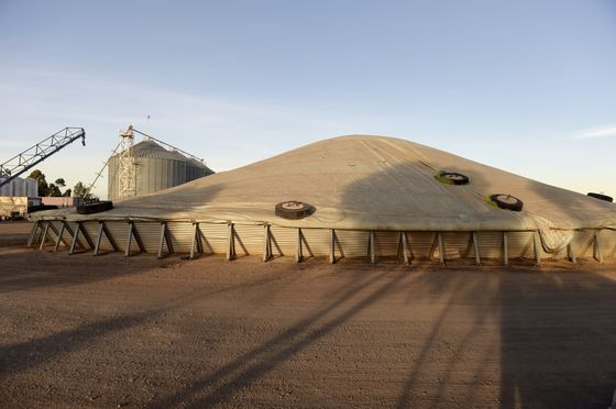 China's Swipe at Australian Barley Sparks Quest for New Markets