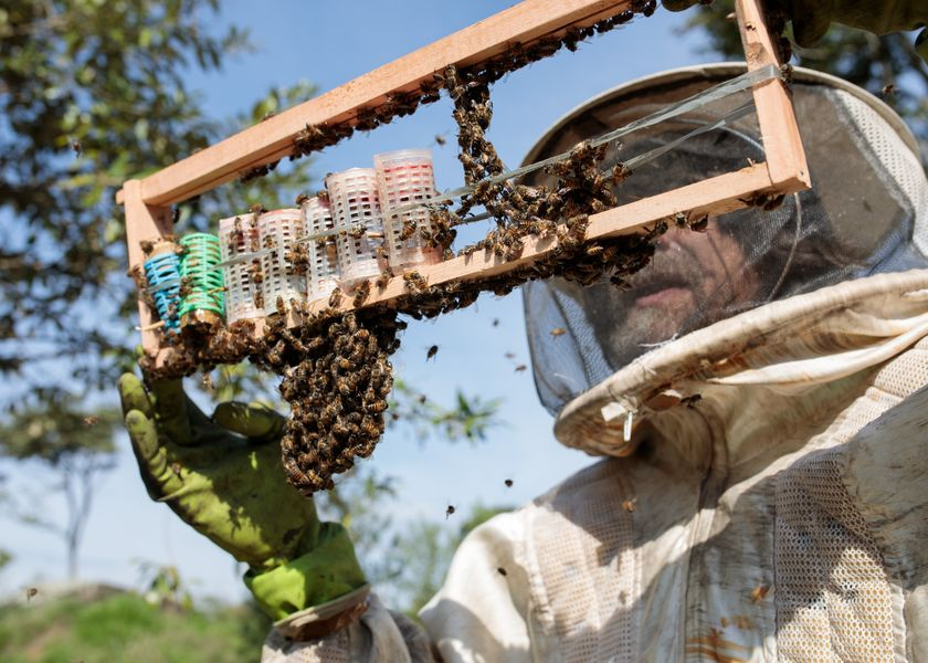 relates to Bees Are Dropping Dead in Brazil and Sending a Message to Humans