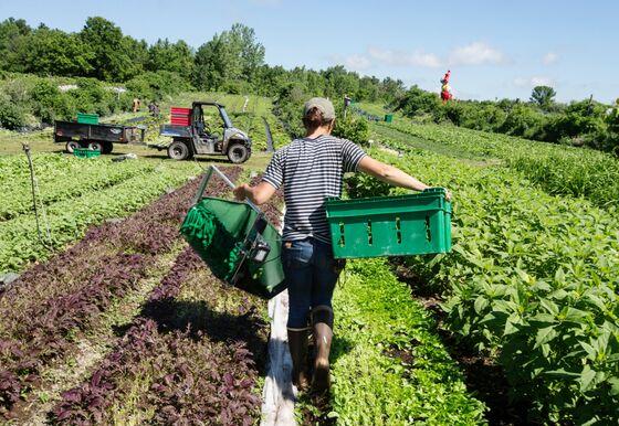 Billionaire Desmarais Takes Page From Rockefeller in Farm Push