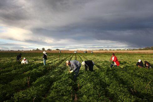 Will Immigration Reform Wilt Like the Farm Bill?