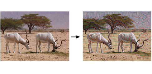 A wildlife photo gets a little trippy when put through DeepDream.