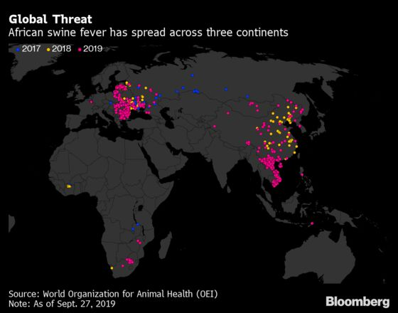The Deadly Pig Virus That's Proving Difficult to Beat