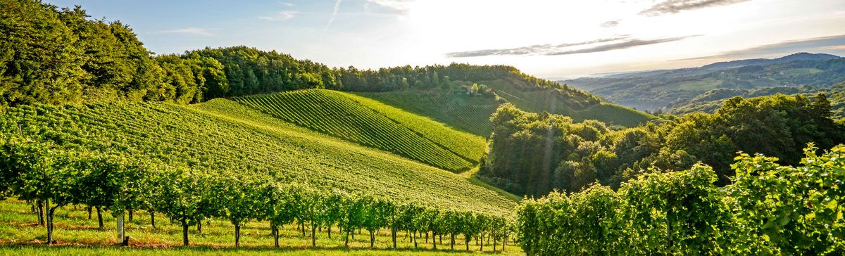 Nine Best Burgundy Wines Under $100