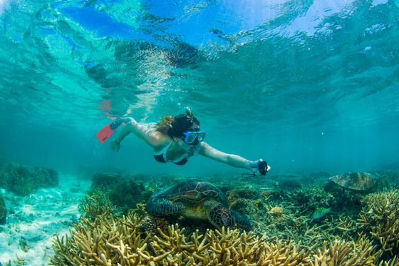 Great Barrier Reef Showing 'Signs of Recovery'