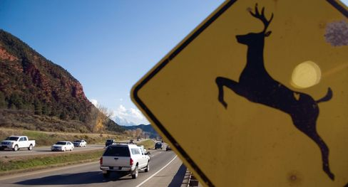 Antelope Roadkill May Hit Menu as Montana Weighs Scrape-Up Fare