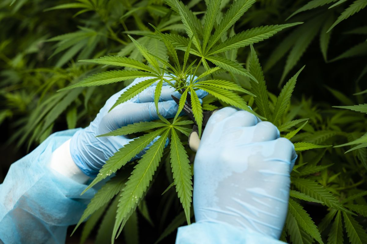 Giant Joint Deployed in Campaign for Cannabis Banking Bill