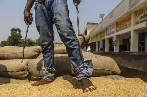Workers unload wheat at a grain market in Karnal, Haryana.