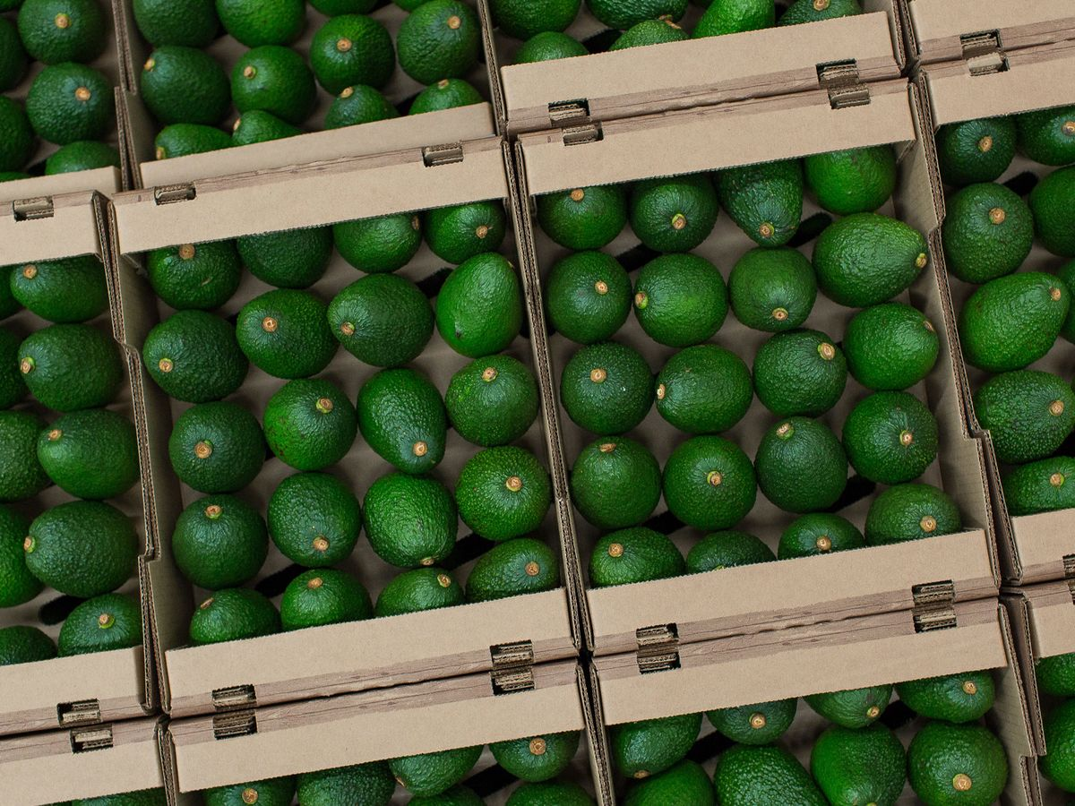 Trump Threats Push Up Mexican Avocado Price Most in a Decade