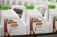 Roundup Attacks Gut Bacteria in People and Pets, Lawsuit Alleges