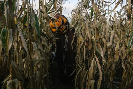 Your Local Haunted Corn Maze Is Infuriating the Neighbors