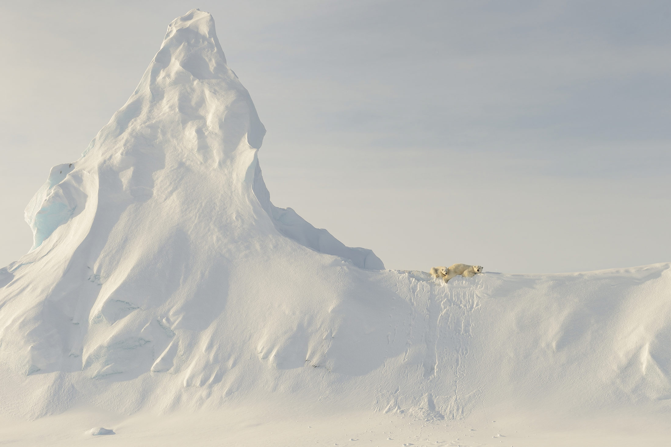 Nature Honorable Mention: Bears on a Berg