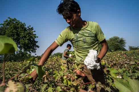 Cotton Crops Slumping Most Since 1993 as China Buys