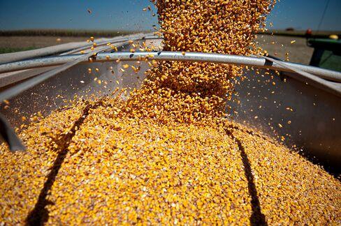 Corn Leads Grain Plunge as U.S. Acreage Tops Analysts Estimates