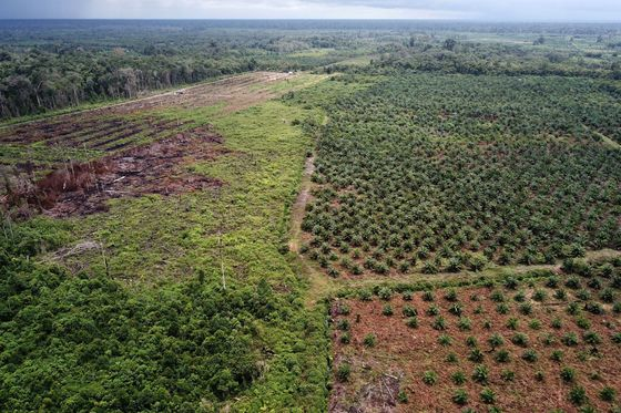 Ben and Jerry's Maker Uses Phones to Track Sustainable Palm Oil