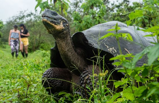 Galapagos Targets 100% Vaccination by May to Lure Tourists Back