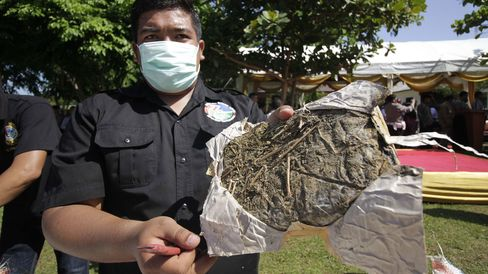 Indonesian narcotics police destroy 11.6 tons of dried marijuana and 682 thousand stem cannabis at the national police headquarters in Aceh, Indonesia, on May 19, 2015.