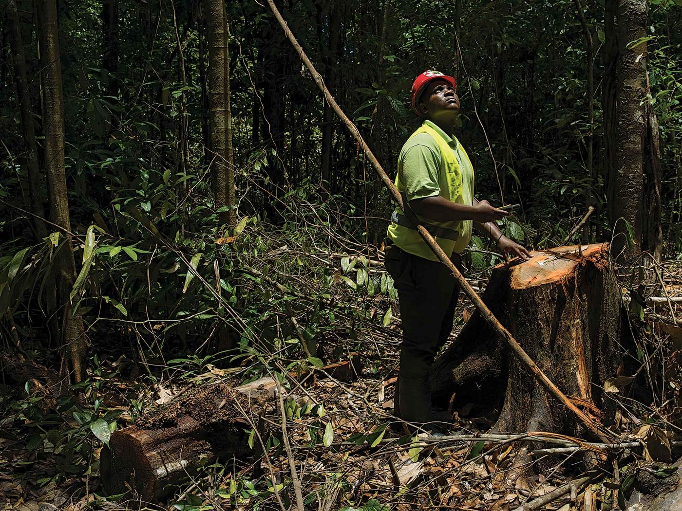 relates to How to Make Money Off Rainforests Without Cutting Them Down