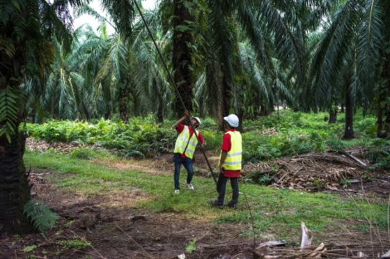 Holidaying in Malaysia? Why Not Visit Its Controversial Palm Oil Farms