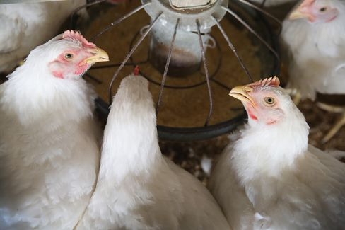 U.S. Bird Flu Outbreak