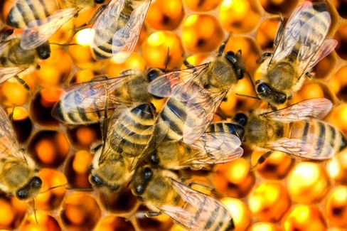 Buzz-Kill: Controversial Pesticide Ban Falters in European Commission