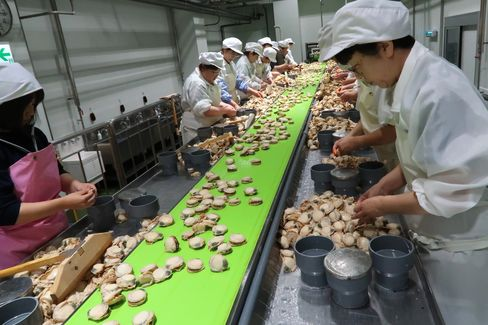 北海道・猿払村の干し貝柱加工場