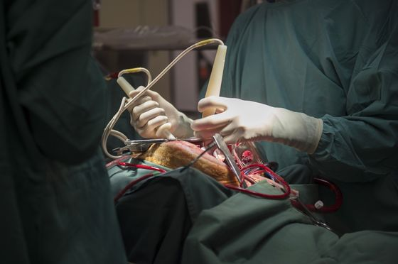 Doctors Knock Out Sheep to Discover Anesthesia's Dark Side