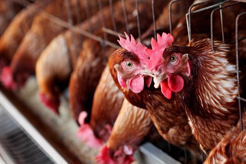 New Bird Flu Strain Kills Third Person in China as Cases Spread