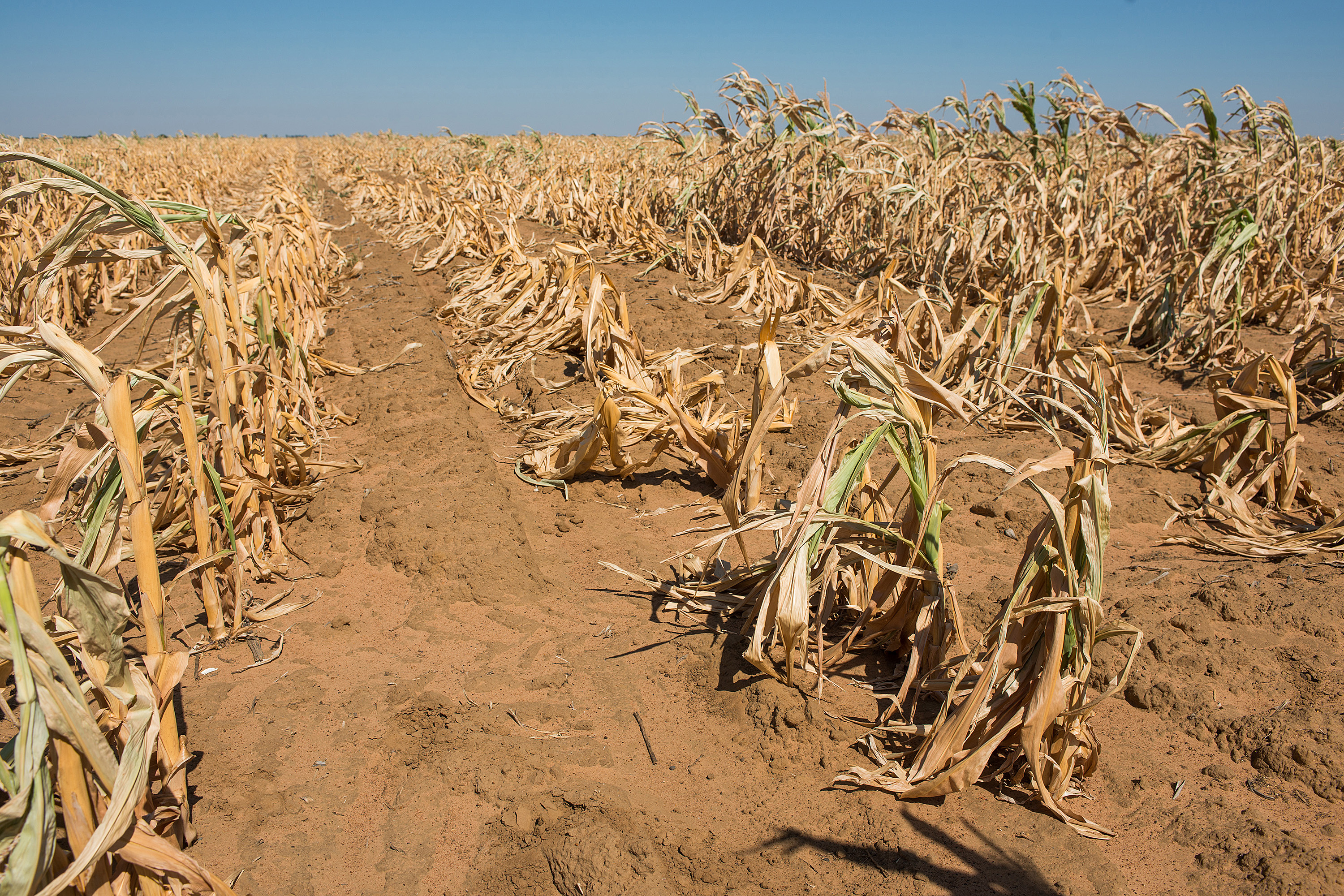 South Africa Risks Water Shortages as Drought Cuts ...