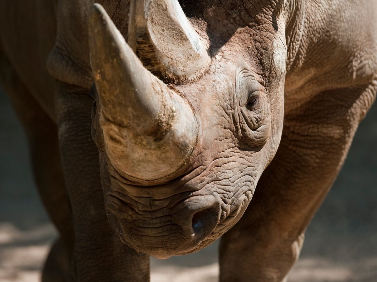 Botswana Raises Alarm Over Unprecedented Surge in Rhino Poaching