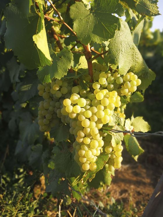 After Disastrous 2017, French WinemakersCheer 'Incredible' 2018 Vintage