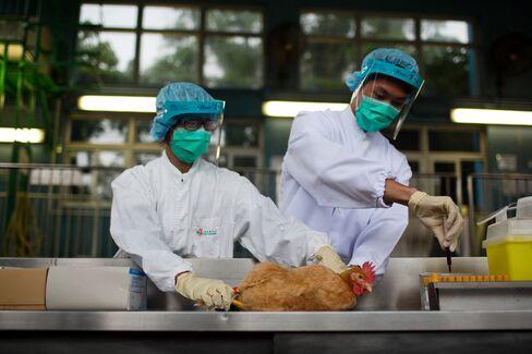 Bird Flu Causing Suffocation Shows Severe Spectrum of New Virus