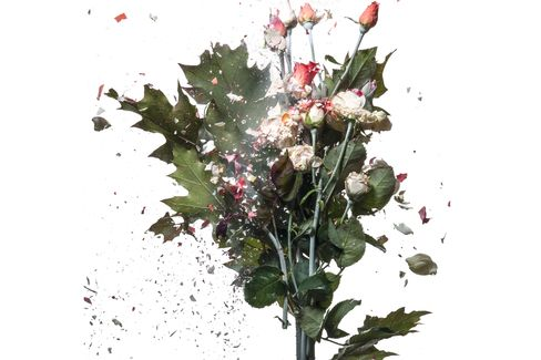 Bouquet of Frozen Roses Crashes And Falls Apart
