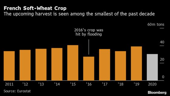 Wheat Forecasts Grow Bleaker for Europe's Top Exporters