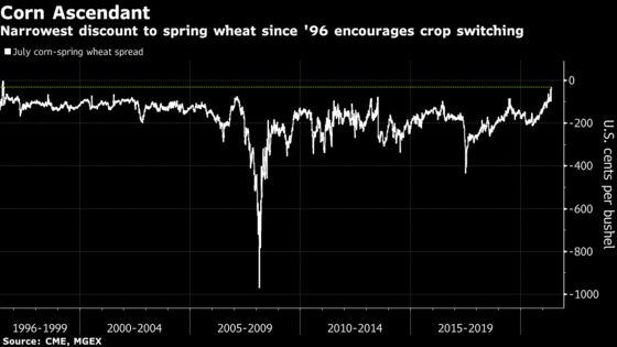 'We Decided to Pull the Pin': Wheat Misery Spurs a Shift to Corn