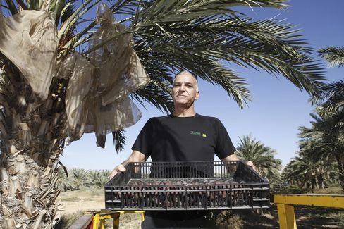 Israeli Farmer and Orchard Manager Benjamin Elkasslasy