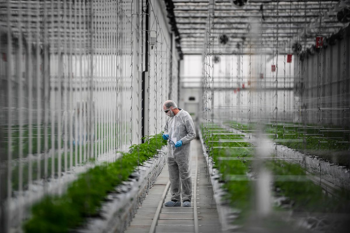 Tilray to Post a Profit in Canada in the 'Next Quarter or Two,' CEO Says