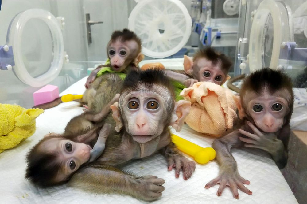 China Is Looking to Gene-Edit Animals to Grow Organs for