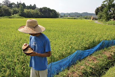 Many Japanese farmers work plots of only one hectare